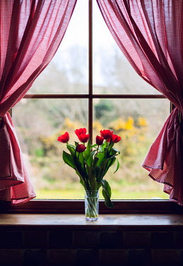 Marie Carr WINDOW WITH RED TULIPS AND CURTAINS