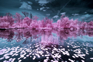 David Keochkerian LILY PADS ON RIVER WITH TREES