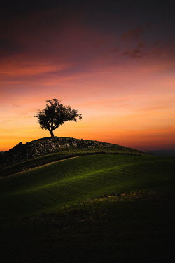 Evelina Kremsdorf TREE BY WALL IN FIELD AT SUNSET