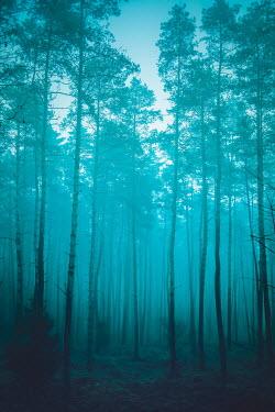 Joanna Czogala FOGGY FOREST AT DUSK