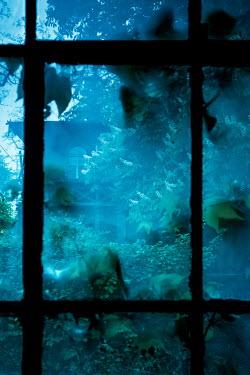 Joanna Czogala OVERGROWN WINDOW WITH VILLA AND GARDEN