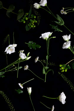 Miguel Sobreira SCATTERED WHITE FLOWERS