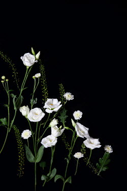 Miguel Sobreira PRETTY WHITE FLOWERS