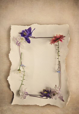 Lyn Randle FRAME OF COLOURFUL FLOWERS LYING ON PAPER