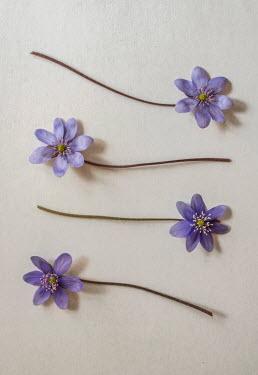 Jaroslaw Blaminsky FOUR PURPLE FLOWERS