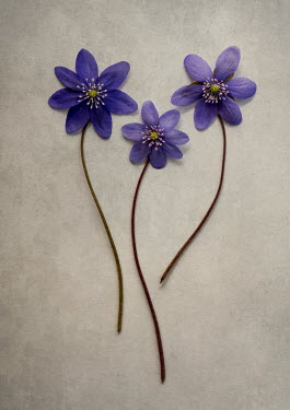 Jaroslaw Blaminsky THREE BLUE FLOWERS WITH STEMS