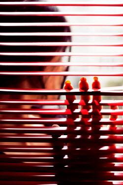 Ebru Sidar BRUNETTE WOMAN TOUCHING RED BLINDS