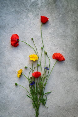 Galya Ivanova BUNCH OF FLOWERS WITH RED POPPIES