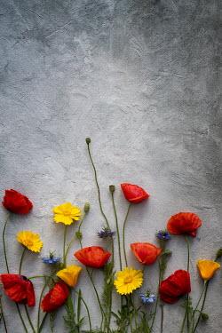 Galya Ivanova RED YELLOW AND BLUE FLOWERS