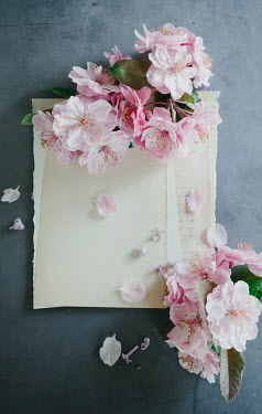 Isabelle Lafrance PINK BLOSSOM ON PAPER