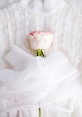 Isabelle Lafrance WHITE AND PINK ROSE LYING ON LACE DRESS
