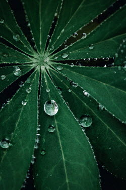 Isabelle Lafrance CLOSE UP OF PLANT WITH DROPS OF WATER