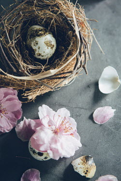 Isabelle Lafrance BIRDS EGG IN NEST WITH BLOSSOM