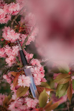 Rebecca Stice MEDIEVAL SWORD LYING IN PINK BLOSSOM