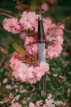 Rebecca Stice MEDIEVAL DAGGER LYING IN PINK BLOSSOM