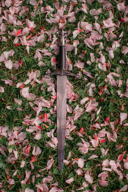 Rebecca Stice MEDIEVAL DAGGER LYING ON GRASS WITH PINK PETALS