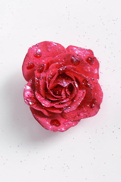 Tijana Moraca PINK ROSE AND HEARTS SPRINKLED WITH GLITTER