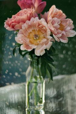 Marina Chebanova PINK FLOWERS BY GLISTENING WINDOW