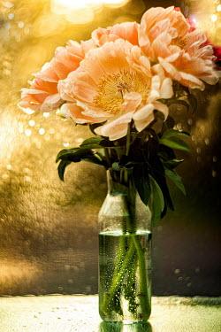 Marina Chebanova ORNAGE FLOWERS BY GLISTENING WINDOW