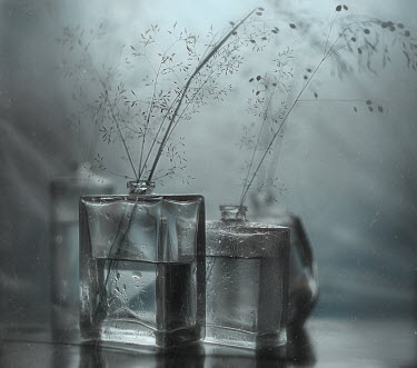 Andreeva Svoboda BOTTLES WITH WATER AND DELICATE GRASSES
