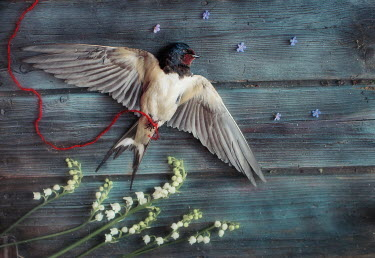 Andreeva Svoboda FLOWERS AND DEAD BIRD TIED WITH RED STRING