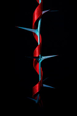 Magdalena Russocka red ribbon wrapped around acacia branch with thorns in shadow