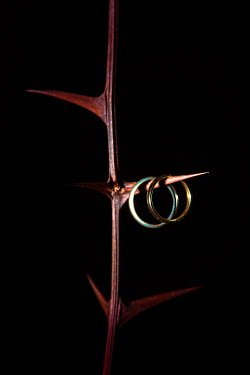 Magdalena Russocka acacia branch and two wedding rings hanging from thorn