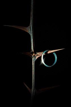 Magdalena Russocka acacia branch and wedding ring hanging from thorn