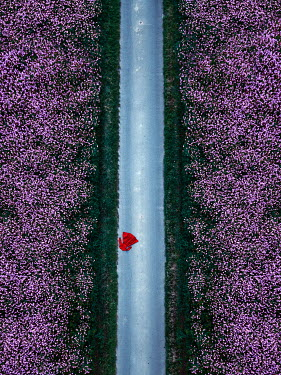 Magdalena Russocka red dress lying on country road in wildflower fields from above