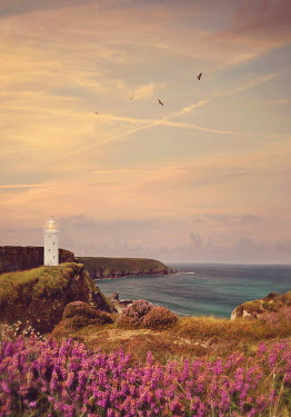 Lyn Randle LIGHTHOUSE ON CLIFF WITH PINK HEATHER