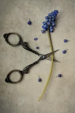 Jaroslaw Blaminsky ORNATE SCISSORS CUTTING BLUE FLOWER