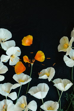 Matilda Delves WHITE AND ORANGE FLOWERS COVERED IN RAINDROPS
