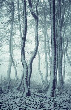 Carmen Spitznagel SNOWY TREES IN FOGGY COUNTRYSIDE