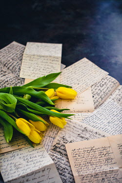 Des Panteva YELLOW TULIPS LYING ON PILE OF LETTERS
