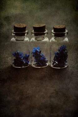 Nic Skerten BLUE FLOWERS IN THREE JARS