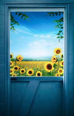 Sandra Cunningham STABLE DOOR WITH FIELDS OF SUNFLOWERS