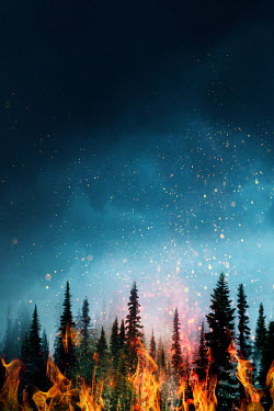 Sandra Cunningham FIRE IN FOREST WITH DARK SKY