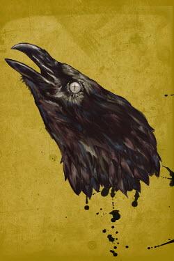 Mark Owen SEVERED HEAD OF BLACK BIRD