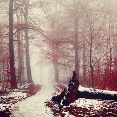 Dirk Wustenhagen FALLEN TREE BY SNOWY COUNTRY LANE
