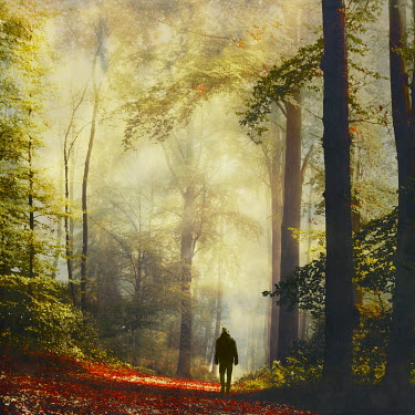 Dirk Wustenhagen MAN WALKING ON FOREST PATH