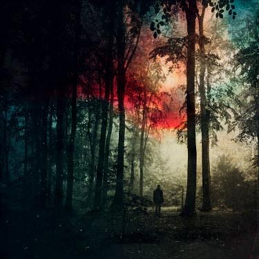 Dirk Wustenhagen MAN STANDING IN FOREST AT NIGHT