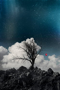 Dirk Wustenhagen RED BALLOON ON TREE WITH CLOUDS AND SKY