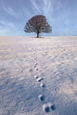 John Race TREE WITH FOOTPRINTS IN SNOWY FIELD