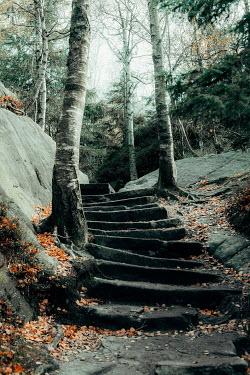 Joanna Jankowska STONE STEPS IN AUTUMN FOREST