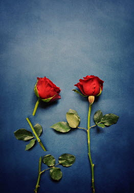 Lyn Randle TWO RED ROSES CUT INTO PIECES