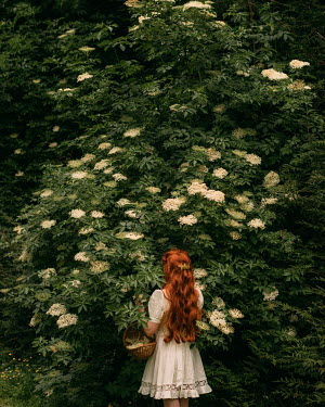 Rebecca Stice GIRL WITH RED HAIR BY BUSH WITH WHITE FLOWERS