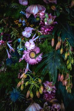 Magdalena Wasiczek PINK FLOWERS AND LEAVES