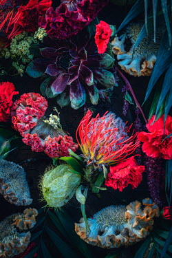 Magdalena Wasiczek SUCCULENT PLANT WITH RED FLOWERS
