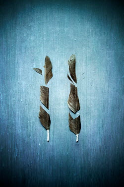 Miguel Sobreira TWO FEATHERS CUT INTO PIECES