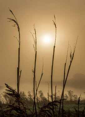 Adrian Leslie Campfield MISTY SUN WITH GRASS AND RIVER